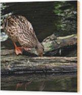 Curious Duck Wood Print