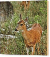 Curious Fawn In Grassy Meadow Wood Print by Christopher Kimmel