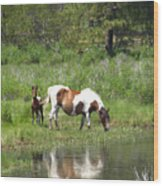 Curious Foal Wood Print