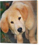 Curious Golden Retriever Pup Wood Print