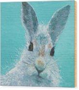 Curious Grey Rabbit Wood Print