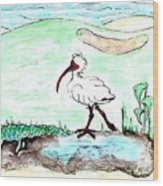 Curious Ibis Stands By Wood Print
