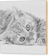 Curious Kitten Wood Print