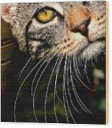 Curious Kitten Wood Print by Meirion Matthias