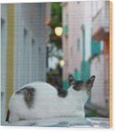 Curious Kitty Wood Print