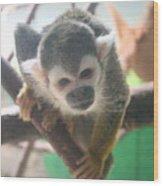 Curious Monkey Wood Print