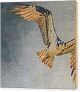 Curious Osprey Wood Print