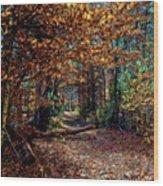 Curious Path In Autumn Wood Print