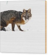 Curious Red Fox In Snow Wood Print