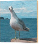 Curious Seagull Wood Print