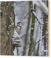 Curious White-backed Woodpecker Wood Print