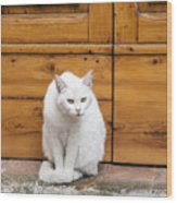 Curious White Cat  Wood Print