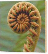 Curled Fern Wood Print