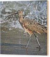 Curlew And Tides Wood Print