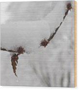 Curtailed Bloom Wood Print