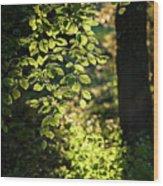 Curtain Of Leaves Wood Print