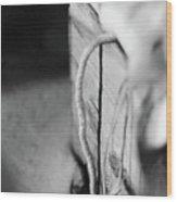 Curve And Line Wood Print
