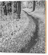Curving Path Through Woods Wood Print