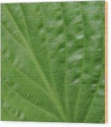 Curvy Leaf Lines Wood Print