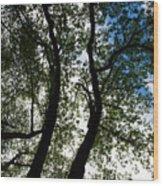 Curvy Trees Wood Print