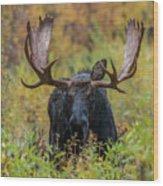 Custer In Autumn Wood Print