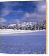 Custer State Park Wood Print by Barry Shaffer