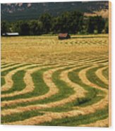 Cut Hay In Field Wood Print