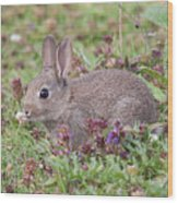 Cute Baby Bunny Wood Print