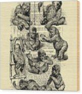 Baby Monkeys Playing Black And White Antique Illustration Wood Print