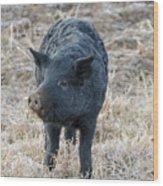 Cute Black Pig Wood Print