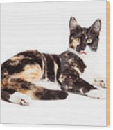 Cute Calico Kiten Sticking Tongue Out Wood Print