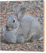 Cute Campground Rabbit Wood Print