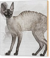 Cute Cornish Rex Youngster Wood Print