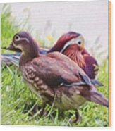 Cute Couple - Mandarin Ducks Wood Print