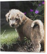 Cute Dog Wood Print