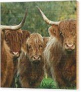 Cute Fluffy Cows Wood Print