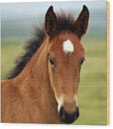 Cute Foal Wood Print