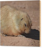 Cute Ground Squirrel Burrowing In The Dirt Wood Print