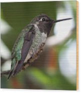 Cute Hummingbird Ready For Action Wood Print