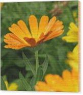 Cute In Orange Wood Print