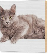 Cute Kitten Laying Over White Loking Forward Wood Print