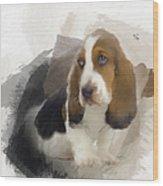 Cute Little Basset Artesien Normand Puppy Wood Print