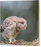 Cute Little Owlet Wood Print