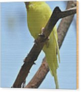 Cute Little Parakeet Resting On A Branch Wood Print