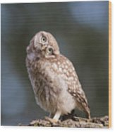 Cute, Moi? - Baby Little Owl Wood Print
