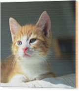 Cute Orange Kitten With Large Paws In Sunny Day Wood Print