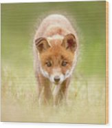 Cute Overload Series - Baby Fox Exploring The World Wood Print