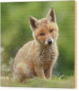 Cute Overload Series - Best Baby Fox Ever Wood Print