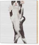 Cute Playful Kitten With Paws Up In Air Wood Print