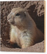 Cute Prairie Dog Climbing Out Of A Hole Wood Print